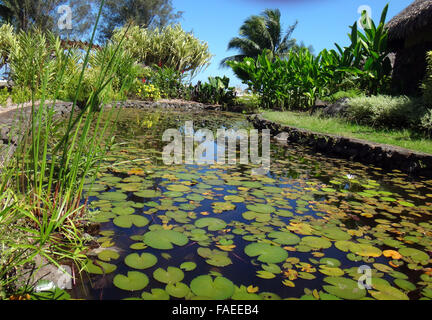 Jardins de pa 39 ofa 39 i in papeete french polynesia stock for Ornamental pond