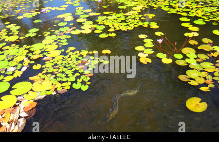 Jardins de pa 39 ofa 39 i in papeete french polynesia stock for Decorative pond fish