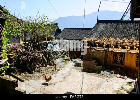 Longji Rice Terraces,Dazhai Villages, Surrounding Area,Rice Crops,Zhuang and Yao Villages,Longsheng,Guangxi Province,PRC,People' - Stock Photo