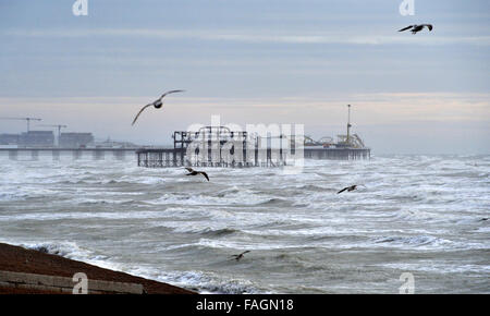 Brighton, Sussex, UK. 30th Dec, 2015. Seagulls glide on the high winds with Brighton's West Pier and Palace Pier - Stock Photo