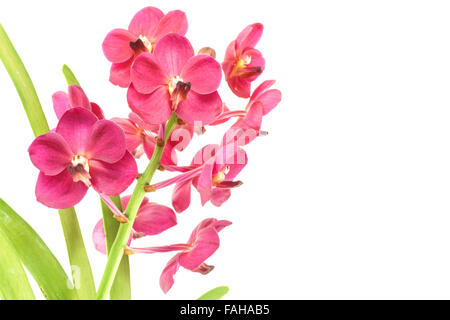 magenta orchid and green leaf isolated on white background - Stock Photo