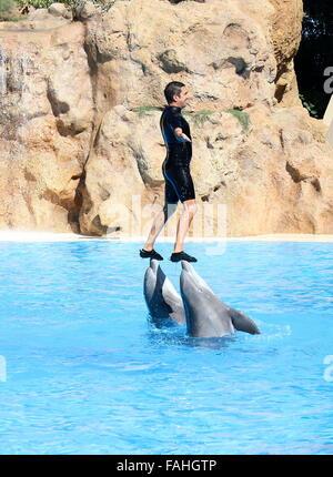 Bottlenose dolphin performing at Loro Parque Zoo & Marine Park in Puerto de la Cruz, Tenerife, Spain