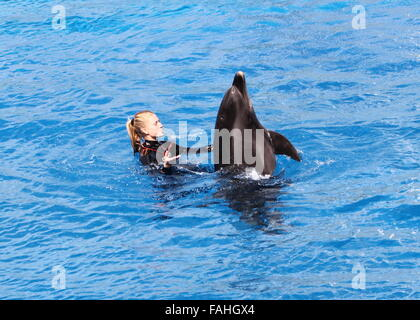 Trainer with a Bottlenose dolphin performing at Loro Parque Zoo & Marine Park in Puerto de la Cruz, Tenerife, Spain - Stock Photo