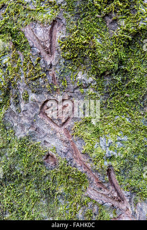 Sign on tree bark as declaration of love. - Stock Photo