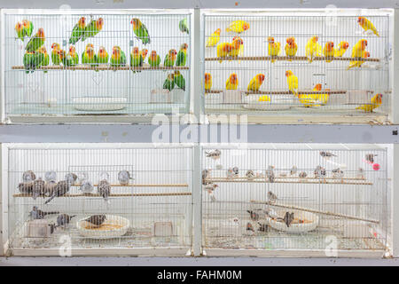 Birds for sale at Souq Waqif, Doha - Stock Photo