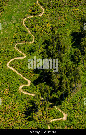 Aerial view, tortuous path, meadow, conifers, pines, looped mountain path at the heathland hut at Niedersfeld, Rothaarhills, - Stock Photo