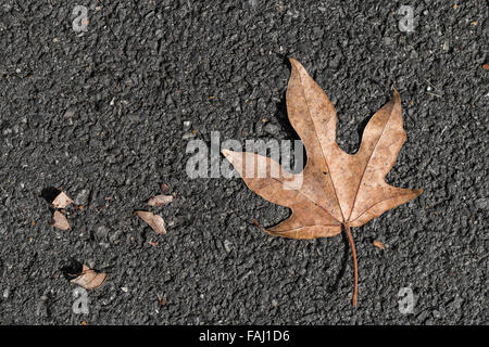 Five star brown leaf drop on the black floor - Stock Photo