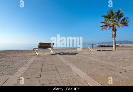 Palm tree and seaside bench with a view to the ocean and blue sky in Molinar, Mallorca, Balearic islands, Spain - Stock Photo