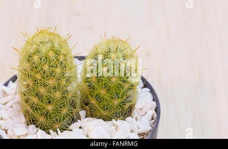 Small cactus in black plastic pot - Stock Photo