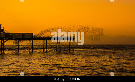 Aberystwyth, Ceredigion, West Wales, UK. 03rd Jan, 2016. UK Weather.  A murmuration  of starlings perform off the - Stock Photo