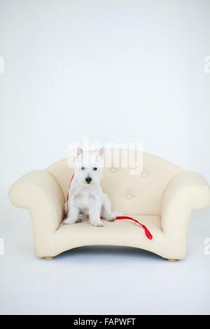 Adorable baby boy with white dog - Stock Photo