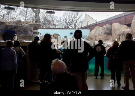 The penguin habitat in the National Aviary in Pittsburgh - Stock Photo