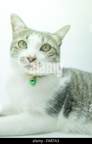 Cute cat portrait wearing a security collar in relaxing time, stock photo - Stock Photo