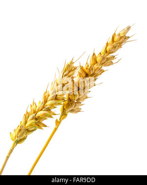 Two ears of wheat isolated on a white background - Stock Photo