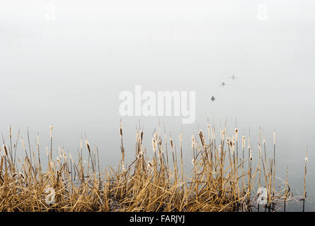 Dry reed on the background of the lake in the fog. - Stock Photo