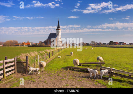 The church of Den Hoorn on the island of Texel in The Netherlands on a sunny day. A field with sheep and little - Stock Photo