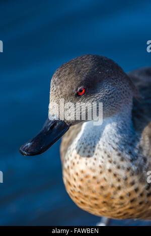 Slimbridge Wildfowl - Stock Photo