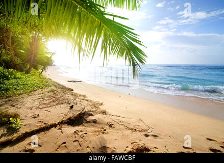 Sandy beach with green palm trees near ocean - Stock Photo
