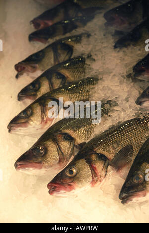 Sea Bass Fish on Sale in Local Market, Le Touquet, France - Stock Photo
