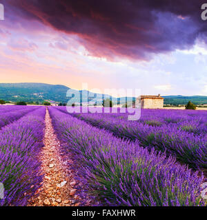 Lavender field summer sunset landscape near Sault..Provence,France - Stock Photo