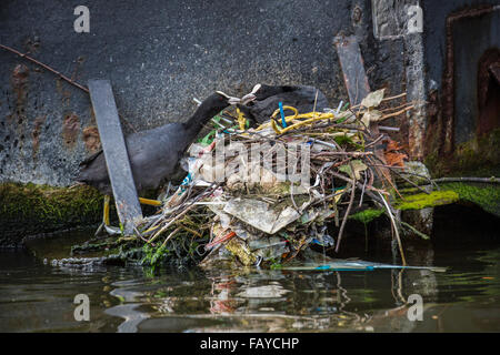 Netherlands, Amsterdam, Coots on nest in canal in city center near houseboat - Stock Photo