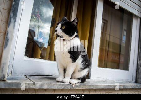Black & white cat sitting on a windowsill, Portugal. - Stock Photo