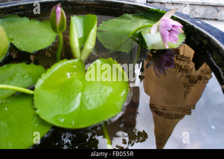 Flower and reflection of Golden stupa, Temple of the Emerald Buddha (Wat Phra Kaew) in the Grand Palace, Bangkok, - Stock Photo