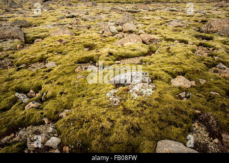 Rock and moss cover the ground in the Icelandic highlands - Stock Photo