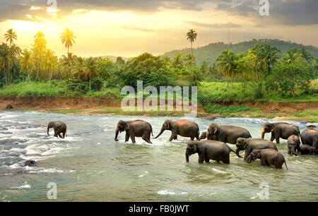 Herd of elephants walking in a jungle river - Stock Photo