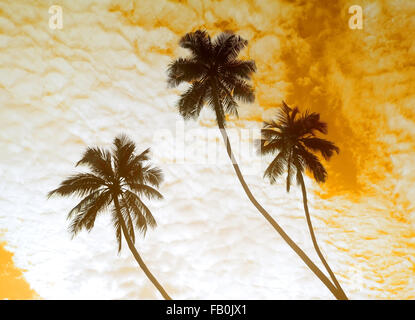 Palm trees on a background of cloudy sky - Stock Photo