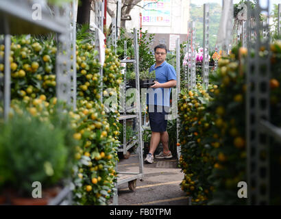 Hong Kong, China. 7th Jan, 2016. A man chooses auspicious plants for the upcoming Spring Festival, or the Chinese - Stock Photo
