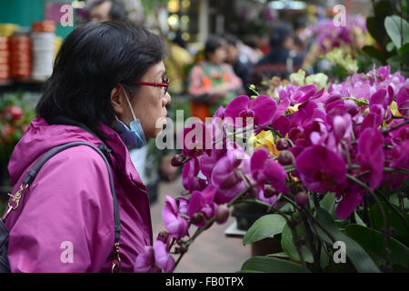 Hong Kong, China. 7th Jan, 2016. A woman chooses auspicious flowers for the upcoming Spring Festival, or the Chinese - Stock Photo