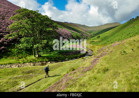 A lone walker setting out at the bottom of Fairbrook in the Peak District. A route to the northern edge of Kinder - Stock Photo