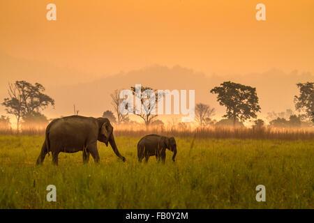 Elephant with Calf - Stock Photo