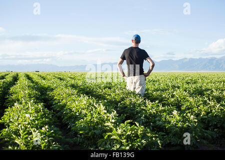 Rear view of mature man standing in field - Stock Photo
