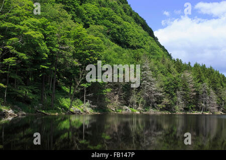 Forest covering mountain reflected in lake