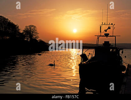 Swan swims past a moored fishing boat as the sun sets in Courtmacsherry, West Cork, Ireland with copy space, ideal - Stock Photo