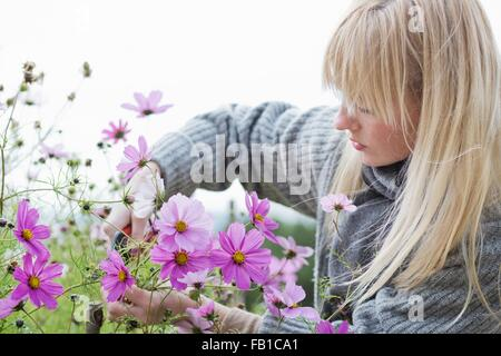Mid adult woman cutting organic flowers in garden - Stock Photo