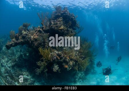 Small group of scuba divers swimming next to giant coral head, Xcalak, Quintana Roo, Mexico - Stock Photo