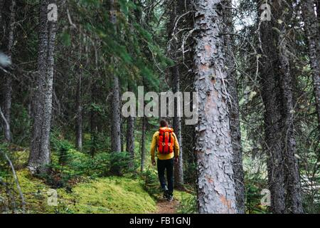 Rear view of mid adult man carrying orange backpack trekking through forest, Moraine lake, Banff National Park, - Stock Photo