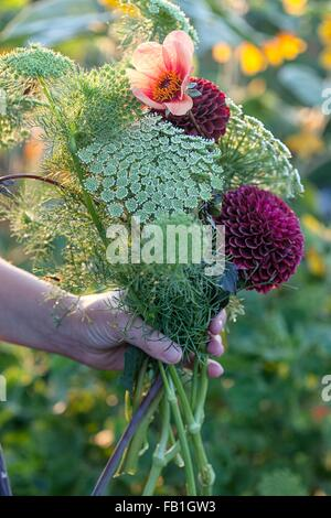 Hand of woman holding fresh flowers and ferns at allotment - Stock Photo