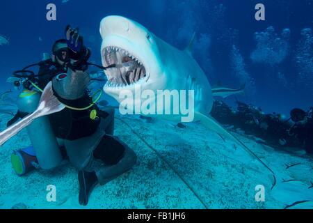 Dive master hand feeding female bull shark, Playa del Carmen, Quintana Roo, Mexico - Stock Photo
