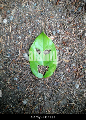 leaf face - Stock Photo