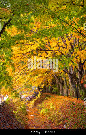 Maple leave corridor of Kawaguchi, Japan during autumn. - Stock Photo