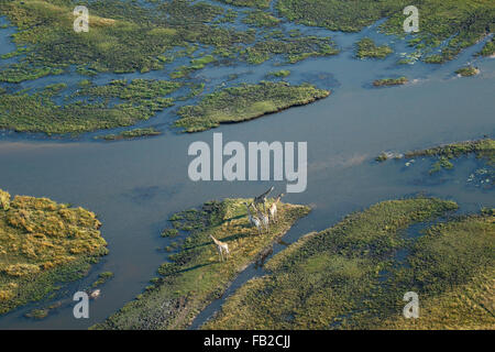 Fantastic aerial view of the Okavango Delta with a herd of Giraffes on an island - Stock Photo