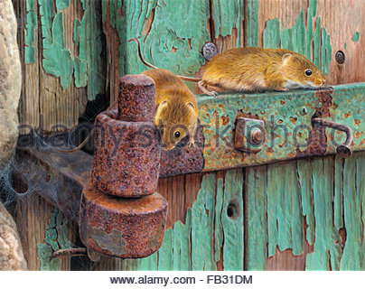 Two harvest mice on rusty hinge of dilapidated door with peeling paint - Stock Photo