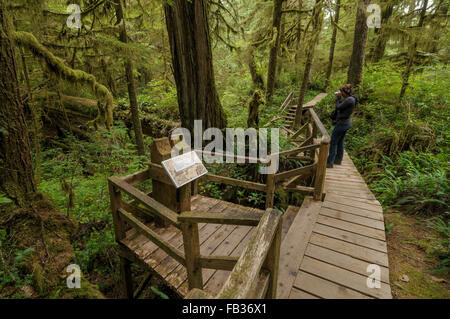 Boardwalk through rain forest, Pacific Rim National Park, BC, West Canada - Stock Photo