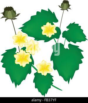 Beautiful Flower, Illustration of Beautiful Abutilon Indicum Flower, Indian Abutilon Flower or Indian Mallow Flower - Stock Photo