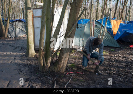 Dunkirk, France. 08th Jan, 2016. A refugee is collecting fire wood from a tree at the refugee camp in Dunkirk, where - Stock Photo