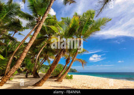 Tropical wild beach at Seychelles, Anse Intendance beach in Mahe Island - Stock Photo
